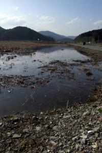 排水不良の水田です.このように常に水が張っています.