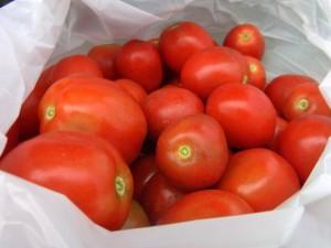 始めて収穫されたクッキングトマト.真っ赤で美味しそうです.まずはトマトソースでパスタですかね?