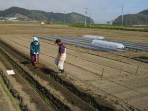 被災農地での作付けがこの春から本格的に再開されます.