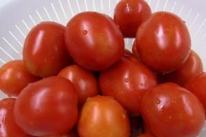 今年も沢山取れそうなクッキングトマト.どんな料理で食べようかな?