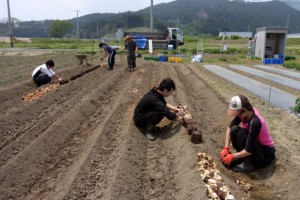 手作業でシイタケ廃菌床を投入します.