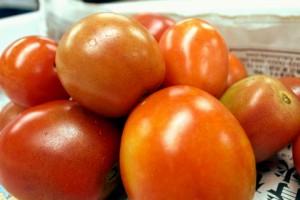 今年始めて収穫されたクッキングトマト