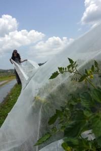 風をはらむ不織布
