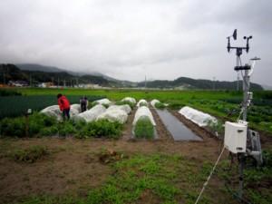 7月は雨が多く,畑の土は水を含み重く湿っています.