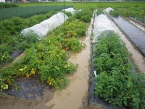水浸しになった野菜畑