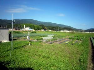 快晴のなかのがんちゃんの野菜畑
