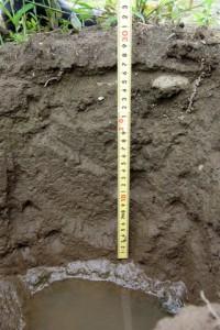 水はけを調べるために縦穴を掘りました.30~40cm程度掘っても水は下に浸透していきません.