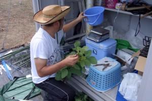 収穫されたエダマメの収量を記録する