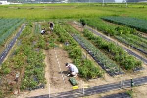 今日の畑の様子.手前で岡田さんがカリフラワーの定植作業をしています.