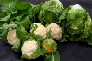 がんちゃんの三陸野菜畑でこの秋に収獲されている冬野菜です.