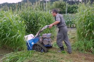 ハンマーナイフモアでソルガムを刈る加藤さんの勇姿