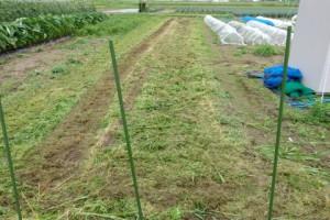 ソルガムを刈り取った後の試験区です.