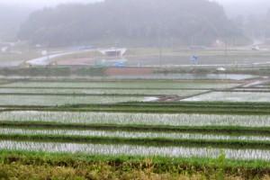 小友地区で復旧された水田.田植えが終わりました.
