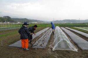 雨の中で苗の定植作業